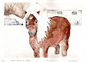 Watercolor - Radu the Romanian Pony