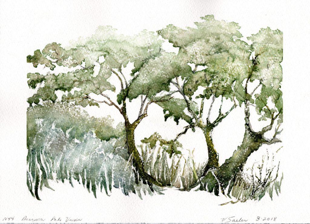 Watercolor - Arizona Palo Verde