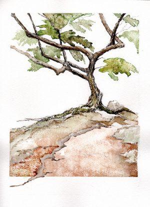 Watercolor - Tucson Mesquite