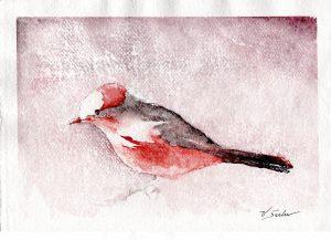 Watercolor - Vermillion Flycatcher