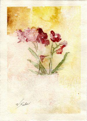 Watercolor - Phalaenopsis Pink
