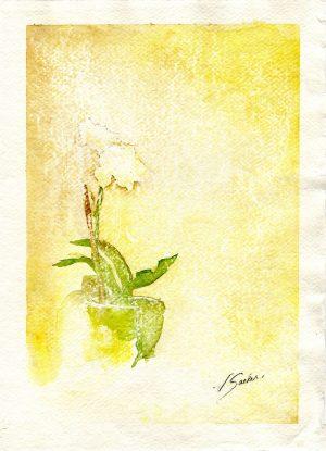 Watercolor - Phalaenopsis Yellow
