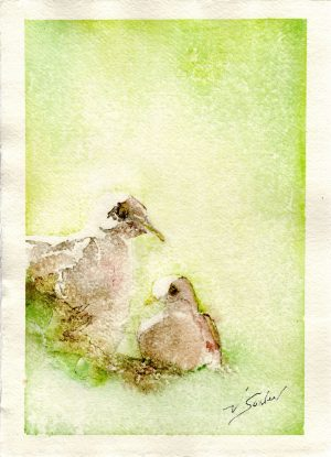 Watercolor - Dove Next in Saguaro