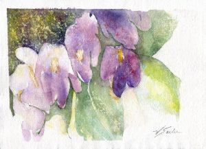 Watercolor - Violets Study 1